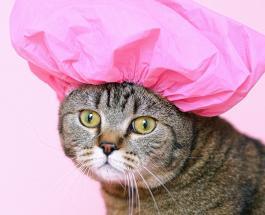 Забавные фото котов которые поднимают настроение пользователям Сети