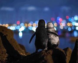 Обнимающиеся пингвины и стая спящих моржей: красочные снимки финалистов конкурса фотографии
