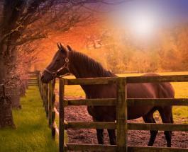 Как выглядит конь Галилео который стоит больше чем Криштиану Роналду и Лионель Месси