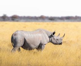 Редкий белый носорог родился в тематическом парке животных во Флориде