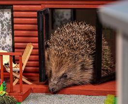 Парк отдыха для ежей: в Англии создали безопасное место для животных впадающих в спячку