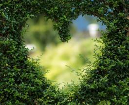 Знаете ли Вы: что означает зеленый цвет и как он влияет на психику человека