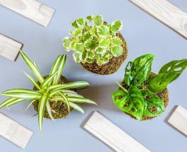 10 комнатных растений которые могут отравлять организм людей и животных