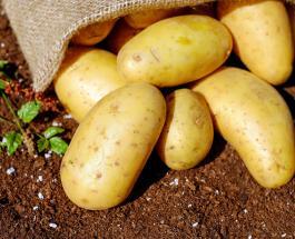Чем батат отличается от обычного картофеля и какой овощ полезнее для здоровья