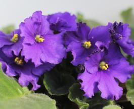 5 комнатных растений увлажняющих воздух во время отопительного сезона