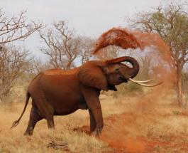 В Индии спасли слона упавшего в колодец: 14 часов понадобилось на вызволение животного