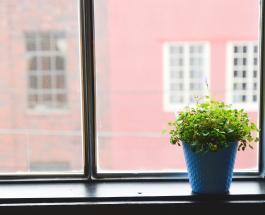 Почему погибают комнатные растения: 7 возможных причин и ошибок