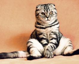Смешное видео про животных: сеть удивил очень эмоциональный кот смотрящий телевизор