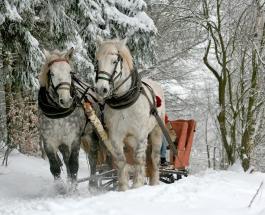 Тест-предсказание на декабрь: о будущем расскажет выбранный зимний сувенир