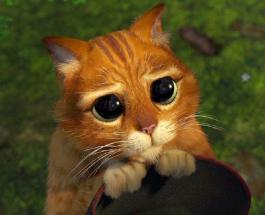 """Копия кота из """"Шрека"""" существует: видео питомца просящего лакомство стало вирусным в сети"""