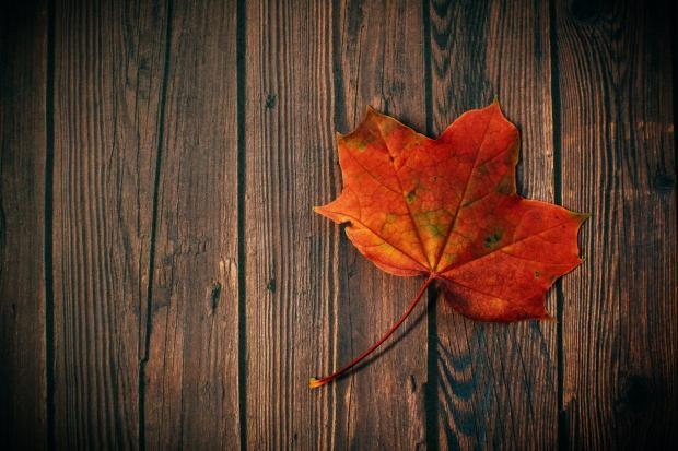 Оранжевый кленовый лист на деревянной доске