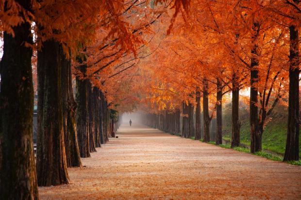 Дорога в осеннем парке