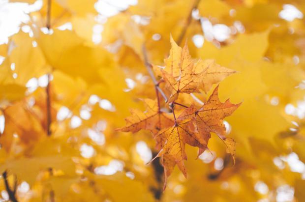 желтые листья на ветке