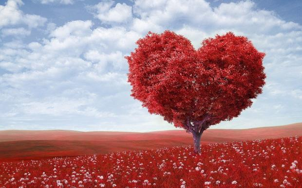 в поле стоит дерево, выстриженное в форме сердца