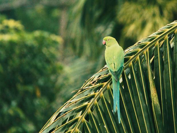 Зеленый попугай на ветке