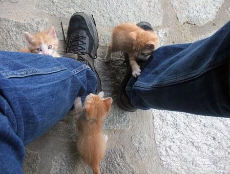 три рыжих котенка висят на джинсах мужчины
