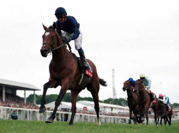 Конь Галилео на скачках