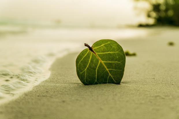морской пляж, один зеленый лист
