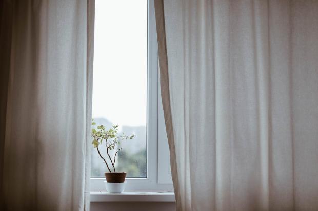 белые шторы на окне и цветок в горшке