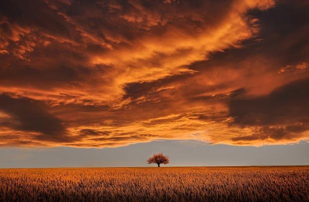оранжевая степь, оранжевые тучи, вдалеке одинокое дерево