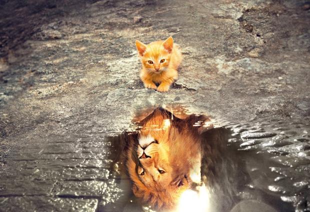 рыжий котенок видит в луже отражение льва