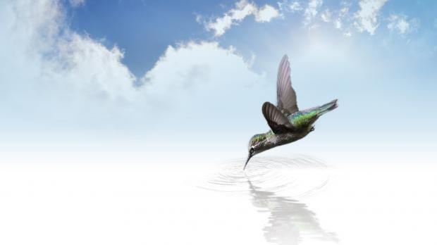 колибри у воды