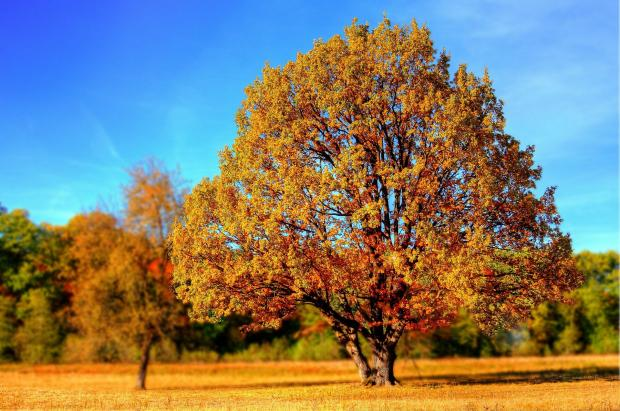 осенние деревья, солнце, голубое небо