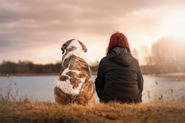 девушка с собакой сидит на берегу пруда