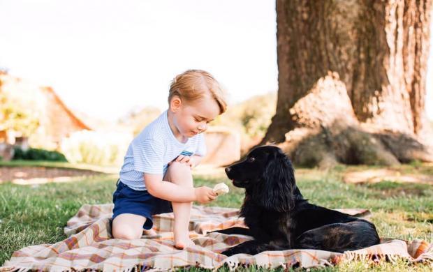 Принц Джордж играет с собакой Лупо
