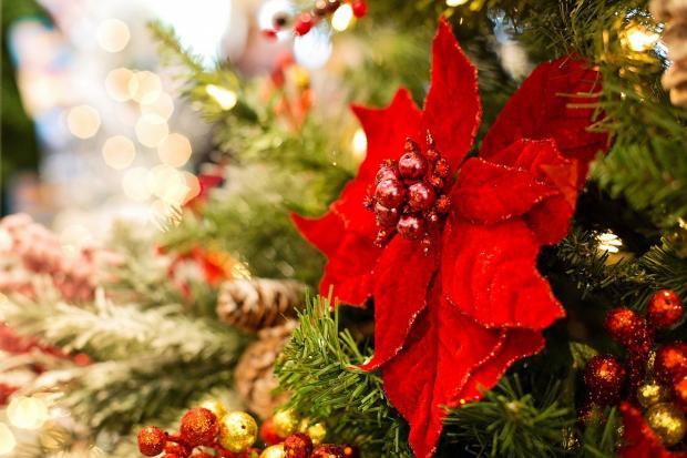 рождественский цветок на украшенной новогодней елке