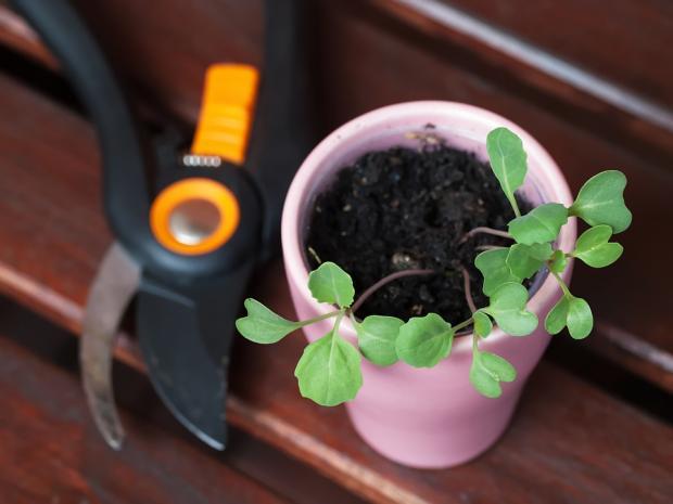 пересадка растений в декабре