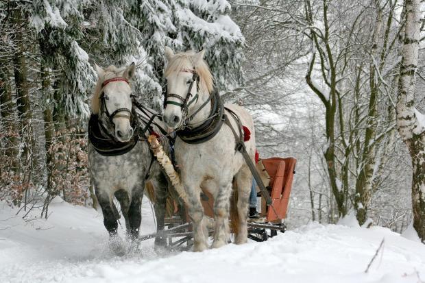 по заснеженному лесу бегут две белых лошади с санями