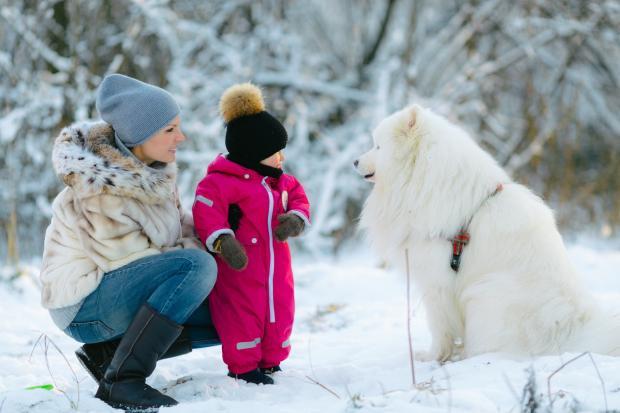 девушка, ребенок и собака в зимнем лесу