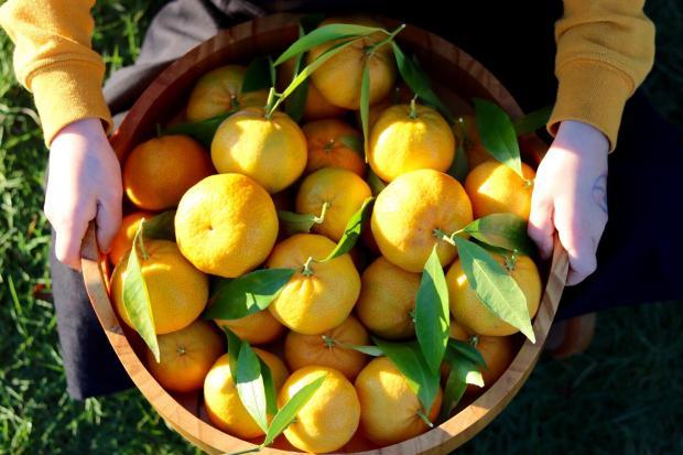 мандарины желтого цвета