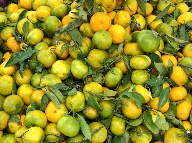 недозрелые мандарины