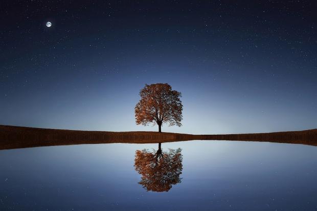 одиноко стоящее дерево вдали, вечер,Луна