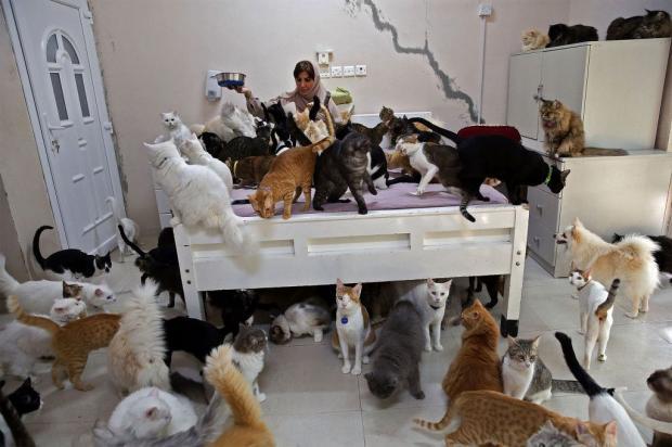 Женщина с котами и собаками