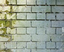 Как удалить плесень со стен: 7 эффективных способов и профилактика проблемы