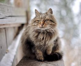 Дом для бродячих кошек своими руками: гениальная идея пришла в голову жительнице Кипра