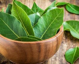 Чем полезен отвар из лаврового листа и как приготовить средство от хронической усталости