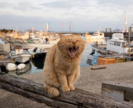 Жизнь бездомных кошек в объективе фотографа из Токио: трогательные фото животных