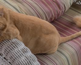 6 быстрых способов очистить мебель и ковры от шерсти домашних животных