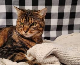 Угрюмый кот по имени Джигглс стал новой звездой сети: фото животного которое всегда кажется сердитым