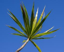15 комнатных растений успокаивающих нервы и избавляющих от стресса