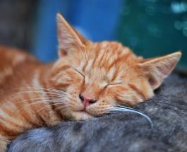 Забавные фото спящих котов: кадры поднимающие настроение пользователям сети