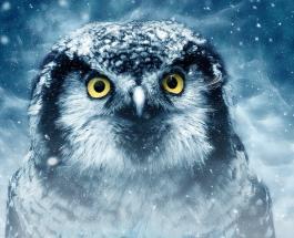 Психологический тест: мудрый совет для души даст выбранное на картинке животное