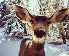 Спасение оленя провалившегося под лед на озере в США сняли на видео