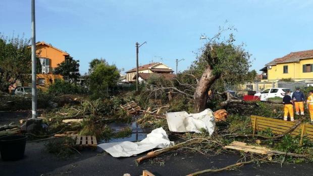 обрушенные деревья