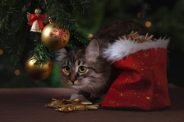 красивый котенок сидит под елкой новогодней с игрушками