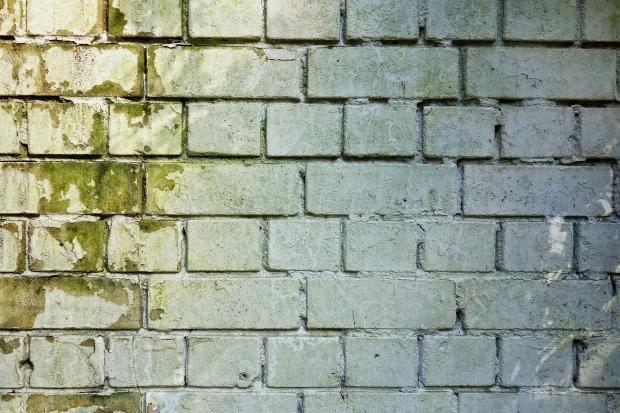 кирпичная стена, покрытая плесенью